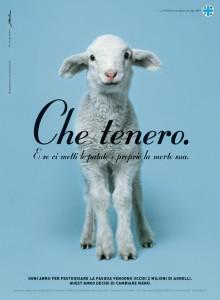 Agnello - Ente nazionale protezione animali
