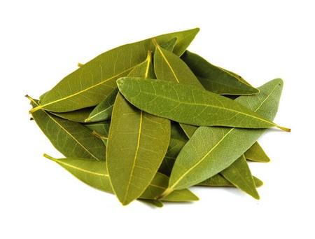 le foglie di alloro servono per perdere peso